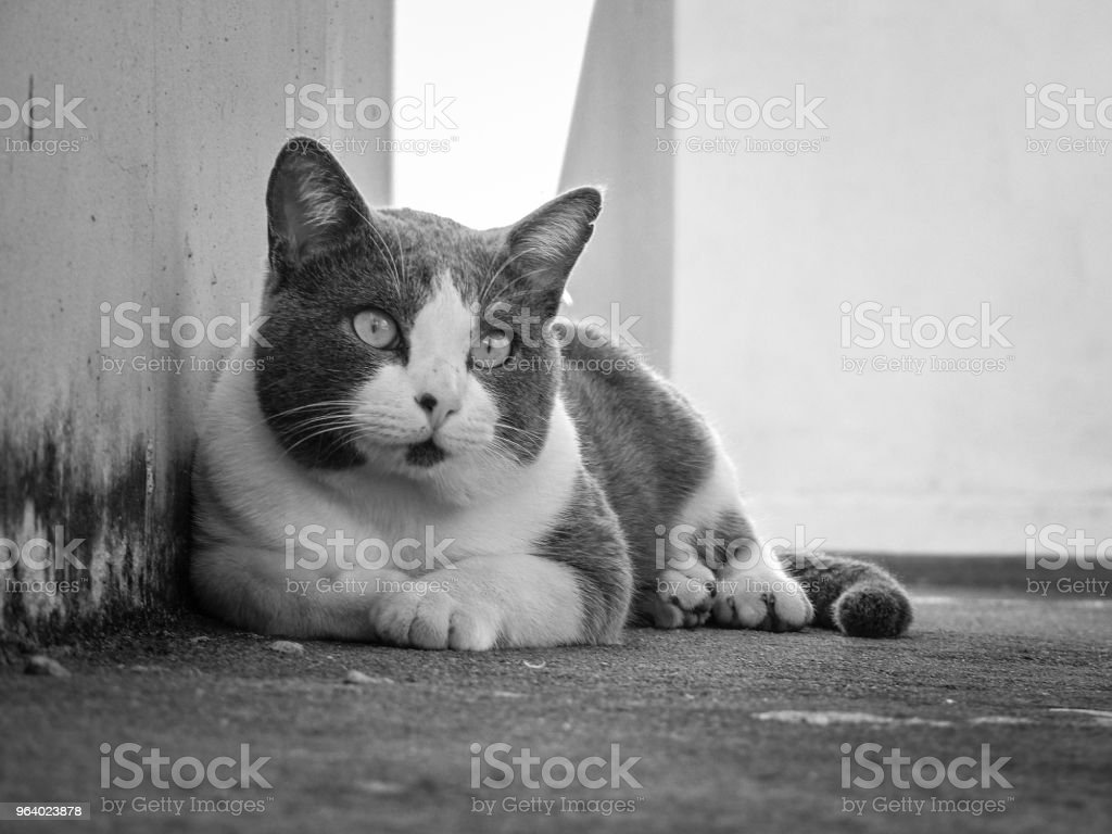 Cat Attentive to something - Royalty-free Animal Stock Photo