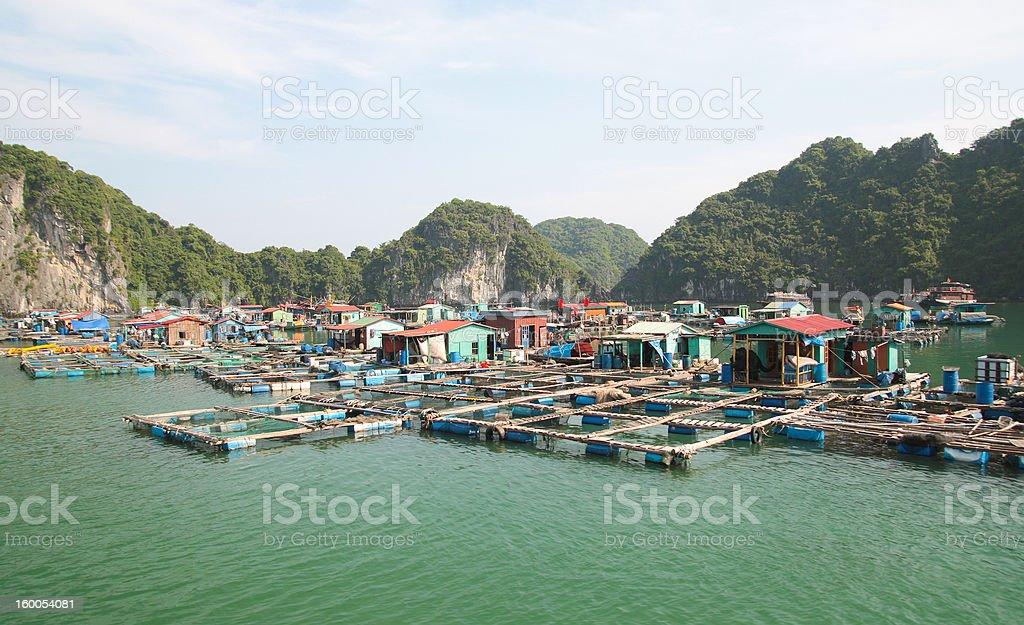 Cat ba Vietnam stock photo