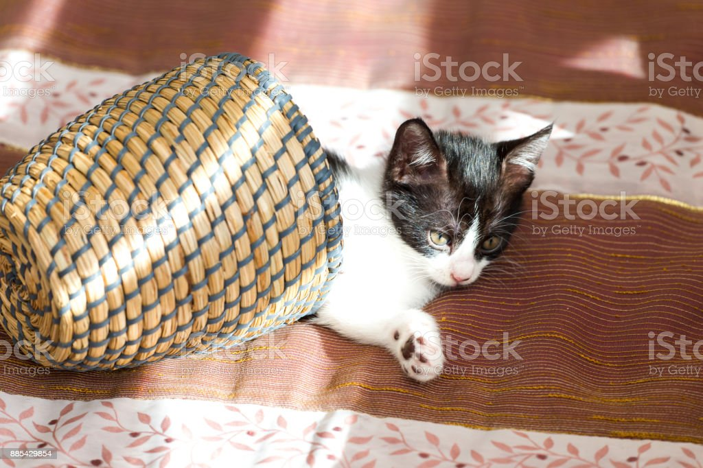 Cat baby stock photo