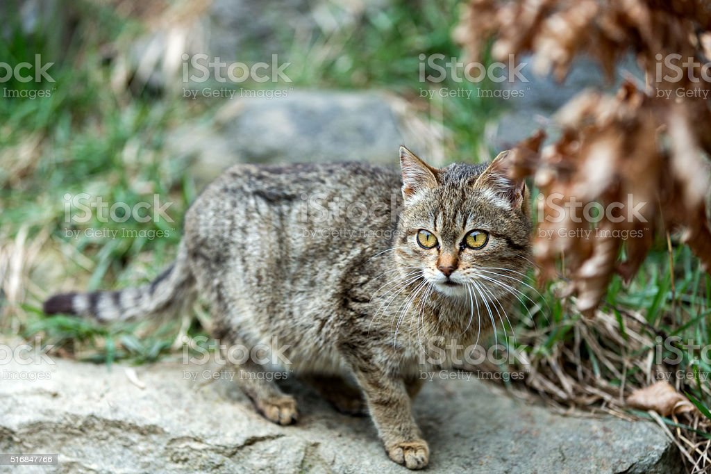 cat baby playing outdoor stock photo