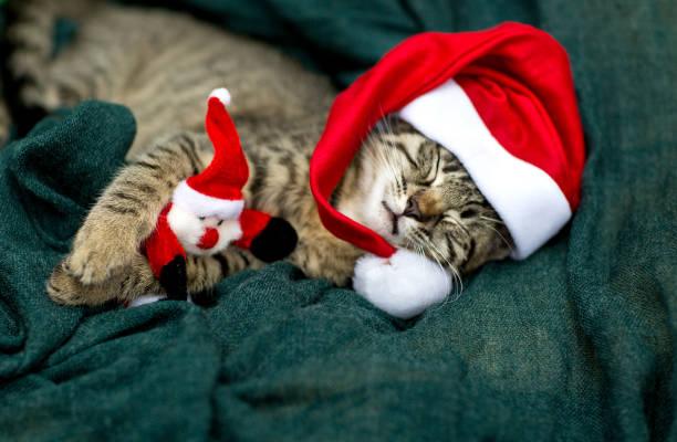 katze baby mit mütze - katze weihnachten stock-fotos und bilder
