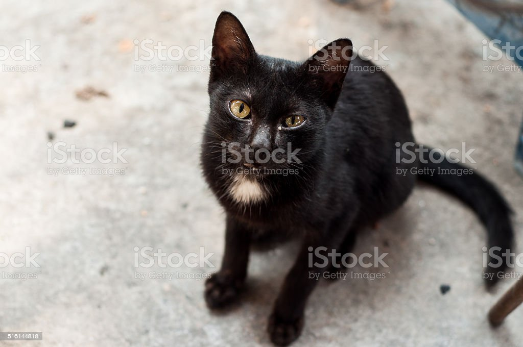 cat back stock photo
