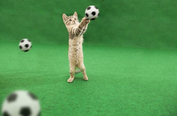 Cat ball keeper picture id981745590?b=1&k=6&m=981745590&s=612x612&w=0&h=3refwysh9uk58ig9el bhrwpw192qjlhbby l4lbb8g=