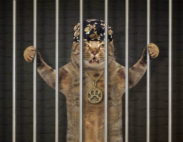 Cat bandit behind bars stock photo