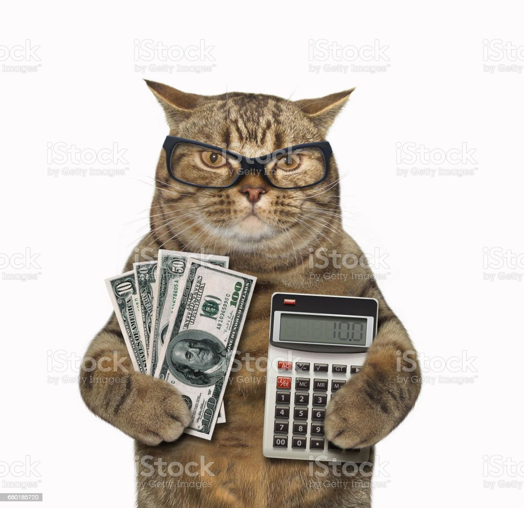 Kedi bankacı 1 stok fotoğrafı