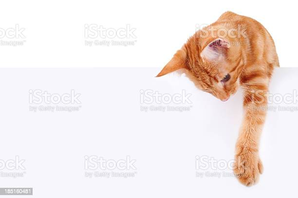 Cat banner sign picture id185160481?b=1&k=6&m=185160481&s=612x612&h= c8flihw0i4keak2uhn5mh4qvaevks l6k0ikremqtk=