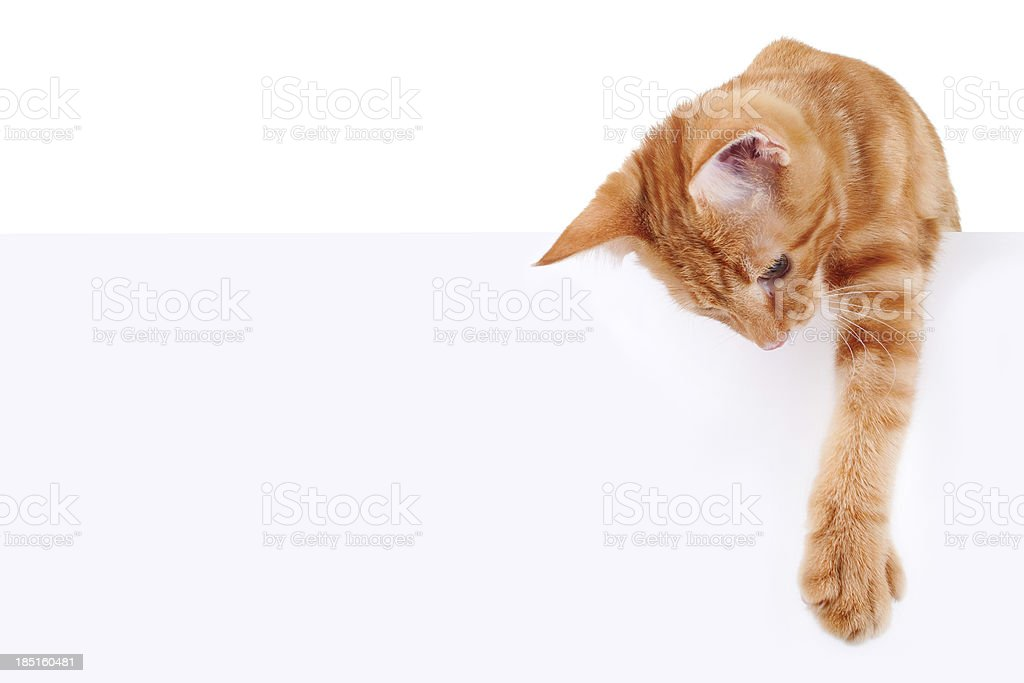 Cat Banner Sign stock photo
