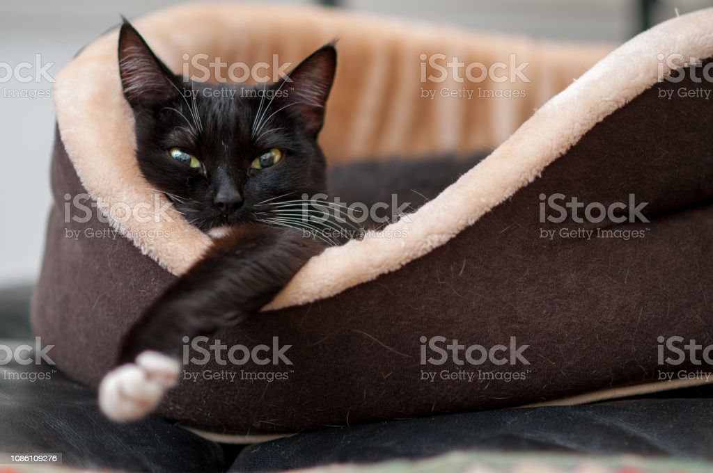 cat bed with a sleeping black cat close-up