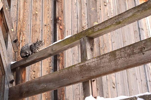 Cat before barn stock photo