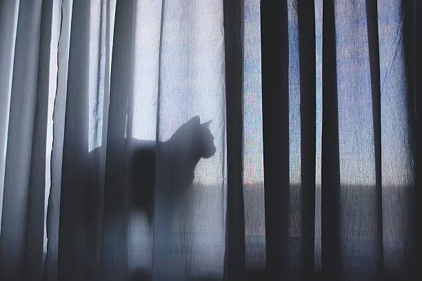 Cat behind a curtain picture id501676314?b=1&k=6&m=501676314&s=612x612&w=0&h=hv7ebkyuxy8zaakl03vimlsa1pma1eo4ihrk jilijw=