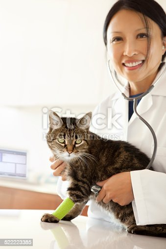 istock Cat Being Examinated By An Asian Woman Veterinarian 522223385
