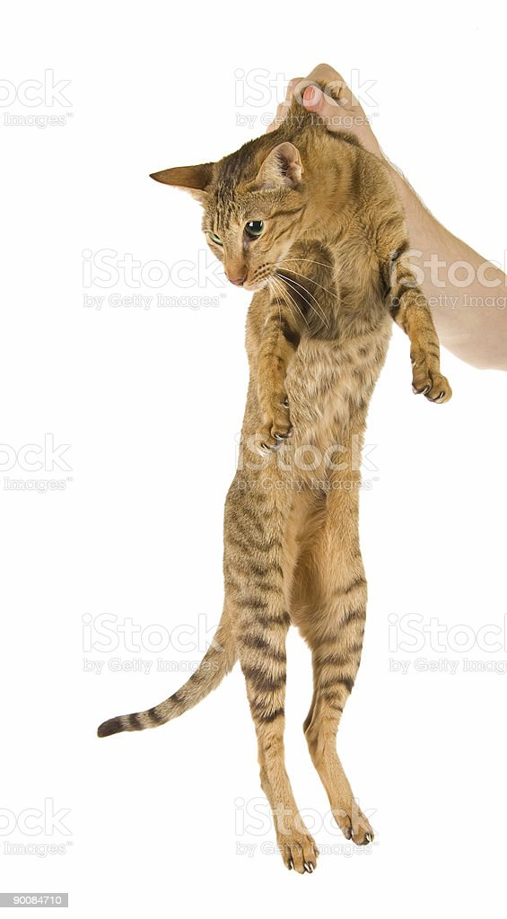 Cat being punished royalty-free stock photo