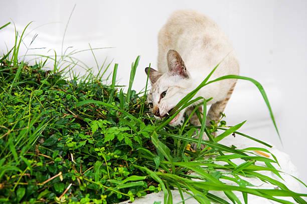 Cat bite in the grass. stock photo