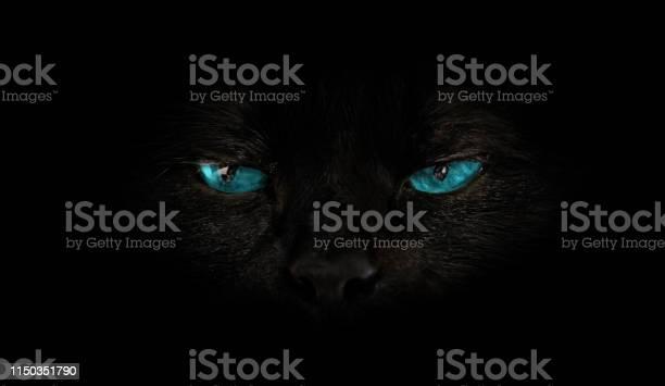 Cat blue eyes picture id1150351790?b=1&k=6&m=1150351790&s=612x612&h=3 zzgcmxqsozkenmkieep6iikgkiokmilj910p7ifok=