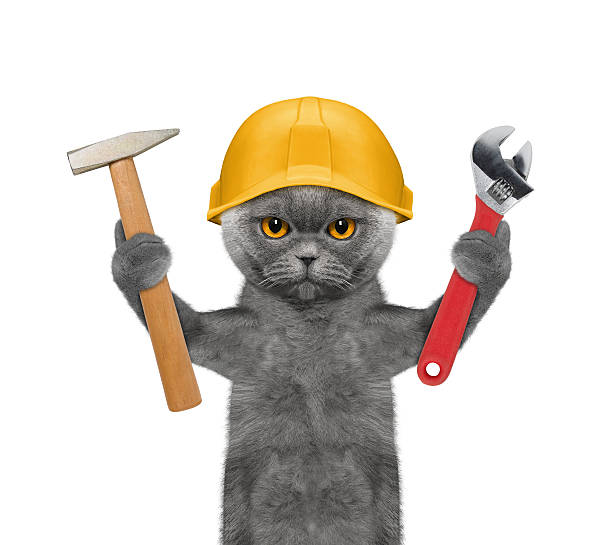 cat builder holding tools in its paws stock photo