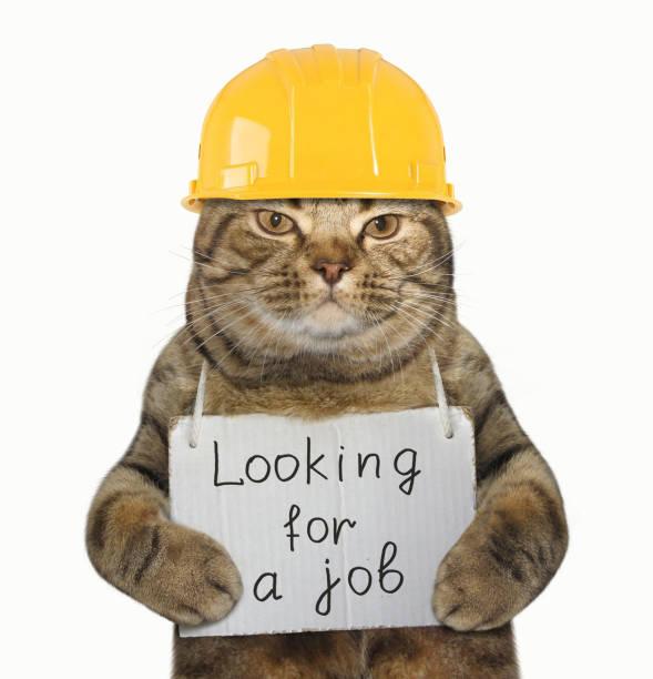 katze-generator brauche job - suche katze stock-fotos und bilder