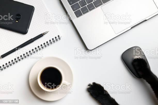 Cat business funny concept cats paws near computer mouse laptop cup picture id1097351198?b=1&k=6&m=1097351198&s=612x612&h=nrlzakqo7meeunvitextfhak1q0vxieim2f6 vga8m8=