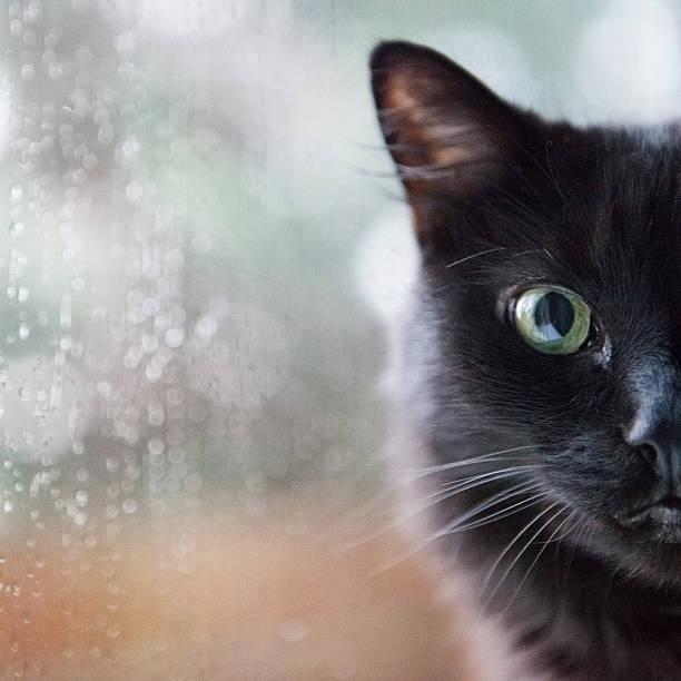 Cat by a window picture id175742960?b=1&k=6&m=175742960&s=612x612&w=0&h=m ud7hfkwmzrvyodj0jz qsup7 uvql0knfcozwphwg=