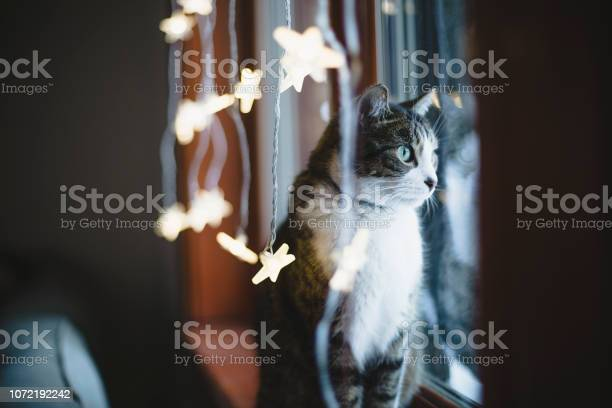 Cat by a window with christmas light decoration picture id1072192242?b=1&k=6&m=1072192242&s=612x612&h=6j 53nz7ezbu sixuelhykumir3gpd9crgxpibjfp5u=