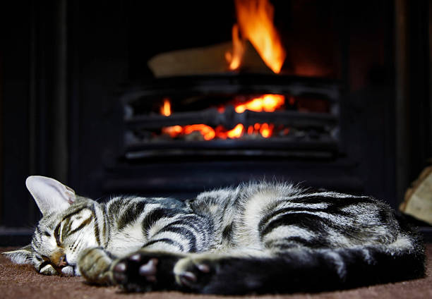 cat by the fire stock photo