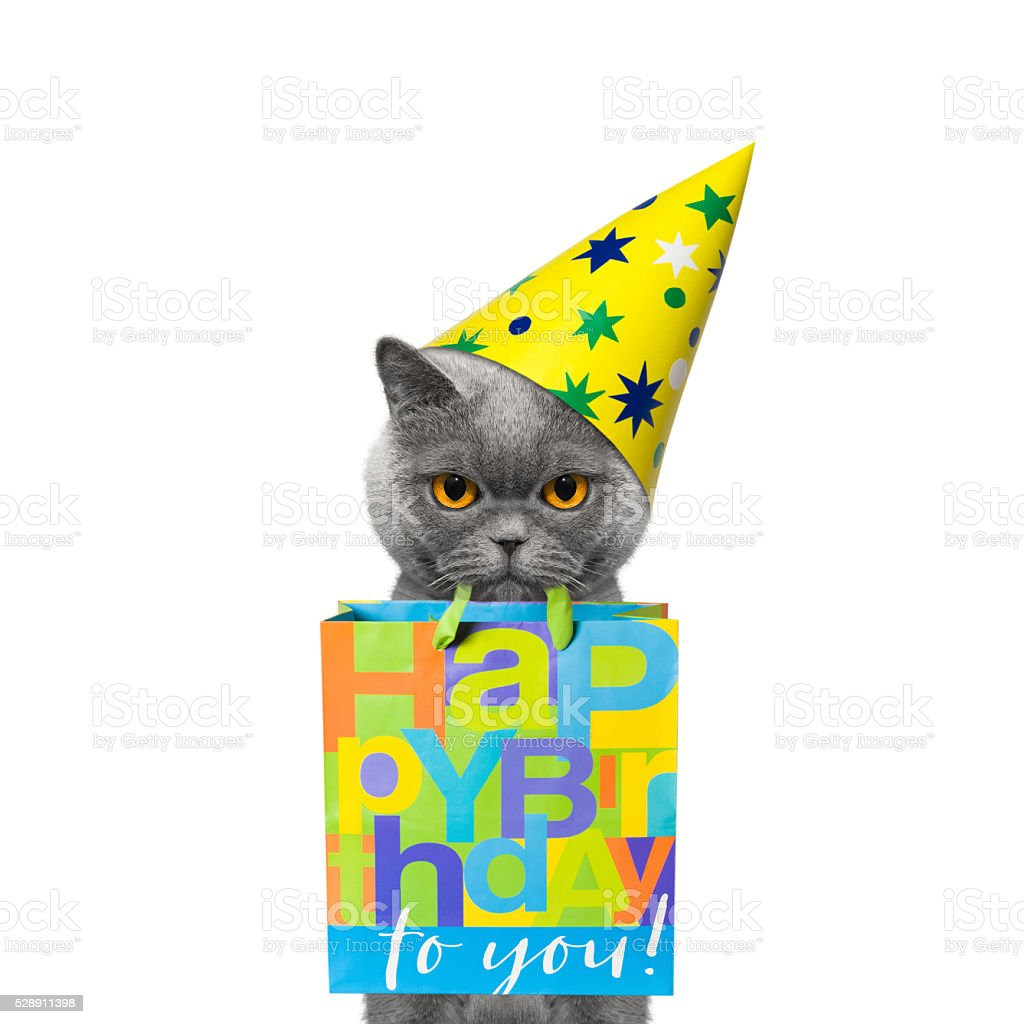 Cat Came To Someones Birthday With A Gift Royalty Free Stock Photo