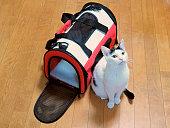 Cat, Carrier Bag