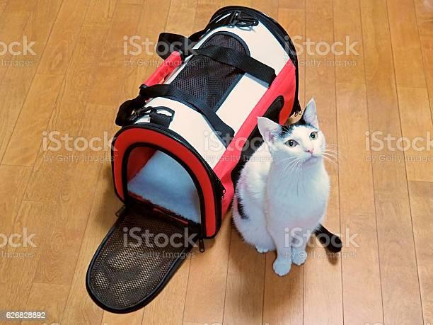 Cat carrier bag picture id626828892?b=1&k=6&m=626828892&s=612x612&h=jpulciefpcnklq t2xlyyqej5sjbu3yjrurxrrqhgzw=