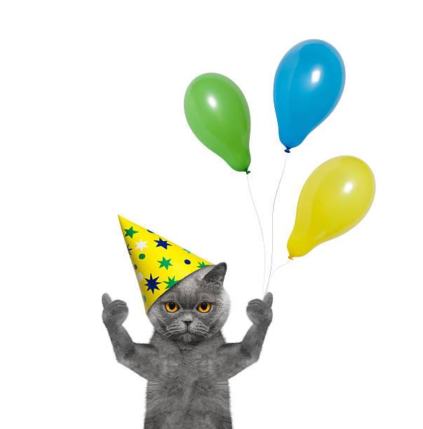 Cat celebrating birthday with balloons picture id524169684?b=1&k=6&m=524169684&s=612x612&w=0&h=9fvcwn0tsfklxoomkqkeby1qjcke4yxp gfskar8wji=