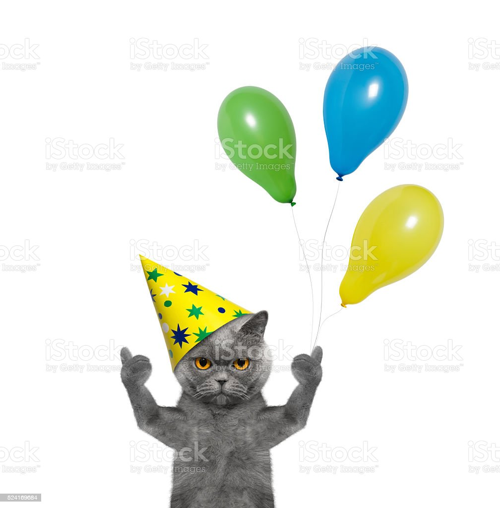 Cat celebrating birthday with balloons stock photo