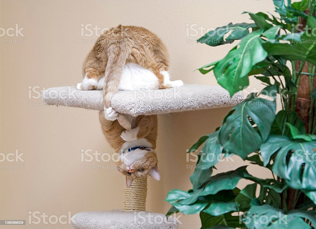 Cat chasing its tail stock photo