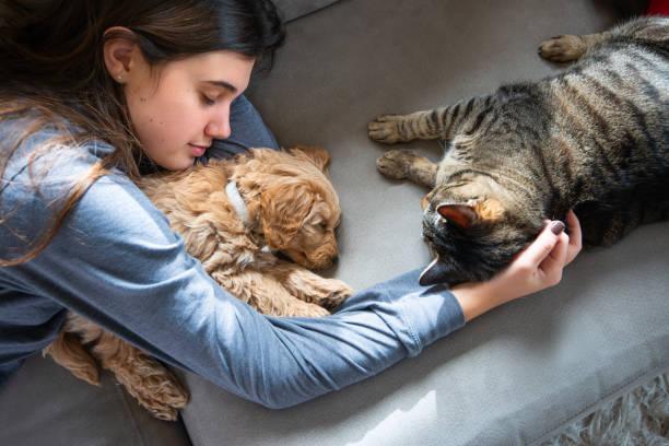 Cat checks out miniature golden doodle puppy asleep with his owner picture id1202354967?b=1&k=6&m=1202354967&s=612x612&w=0&h=0st nd8dksbal9i8bi5o2ise2pc0mqctew6a os9vaa=