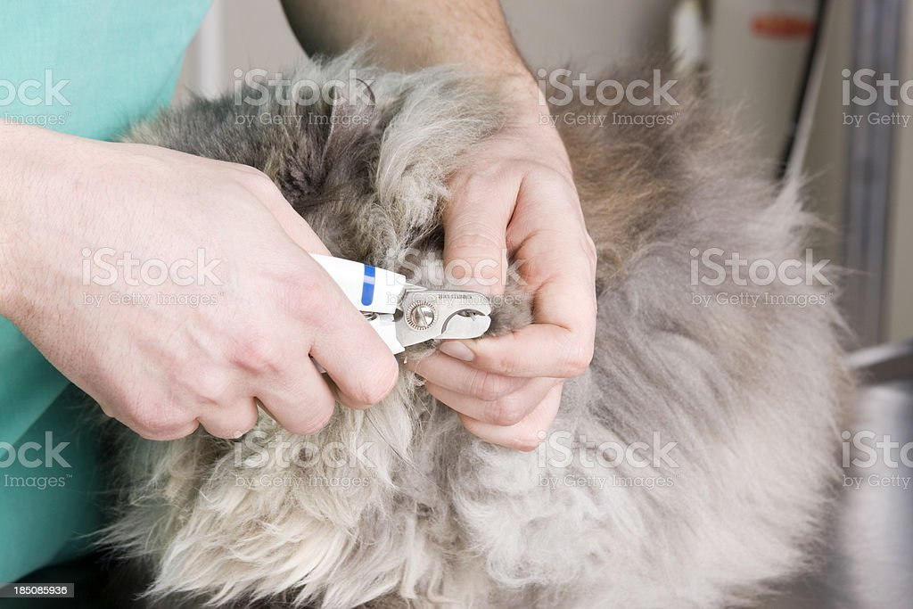 Cat check-up stock photo