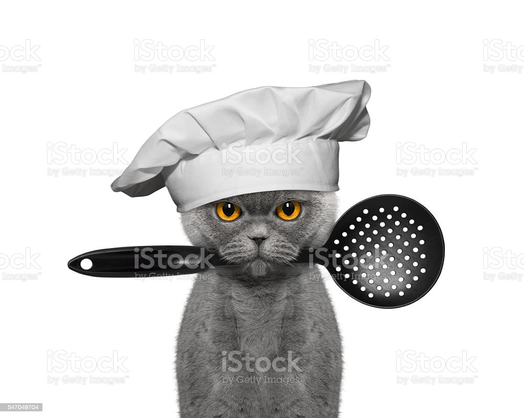 Cat chef holding a spoon in his mouth - Photo