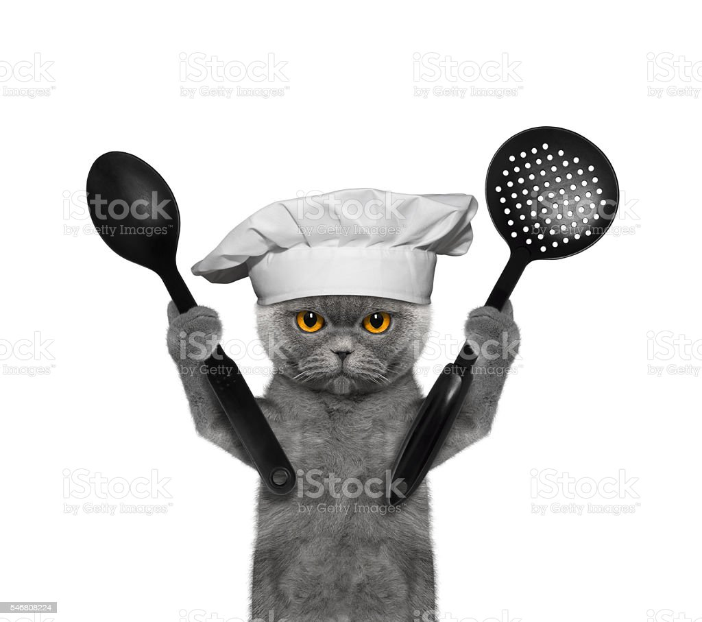 Cat chef is going to prepare meals - Photo