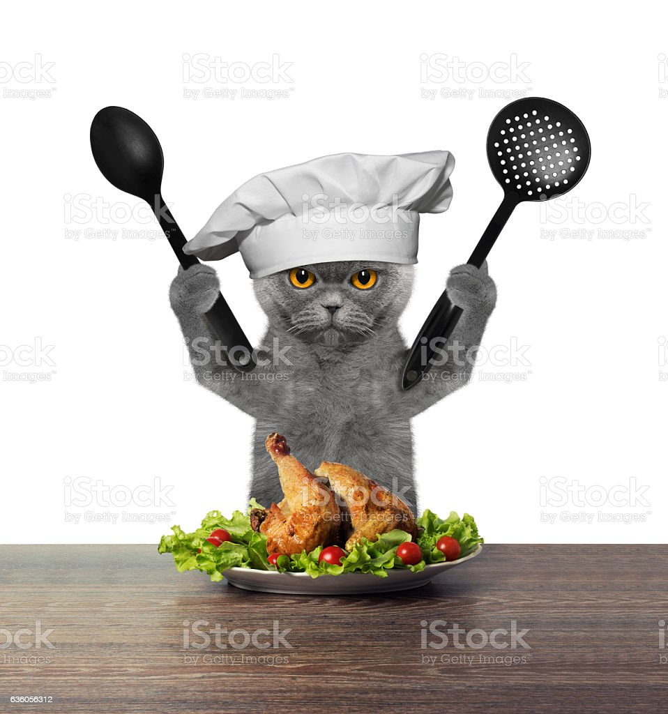Cat chef is preparing chicken - Photo