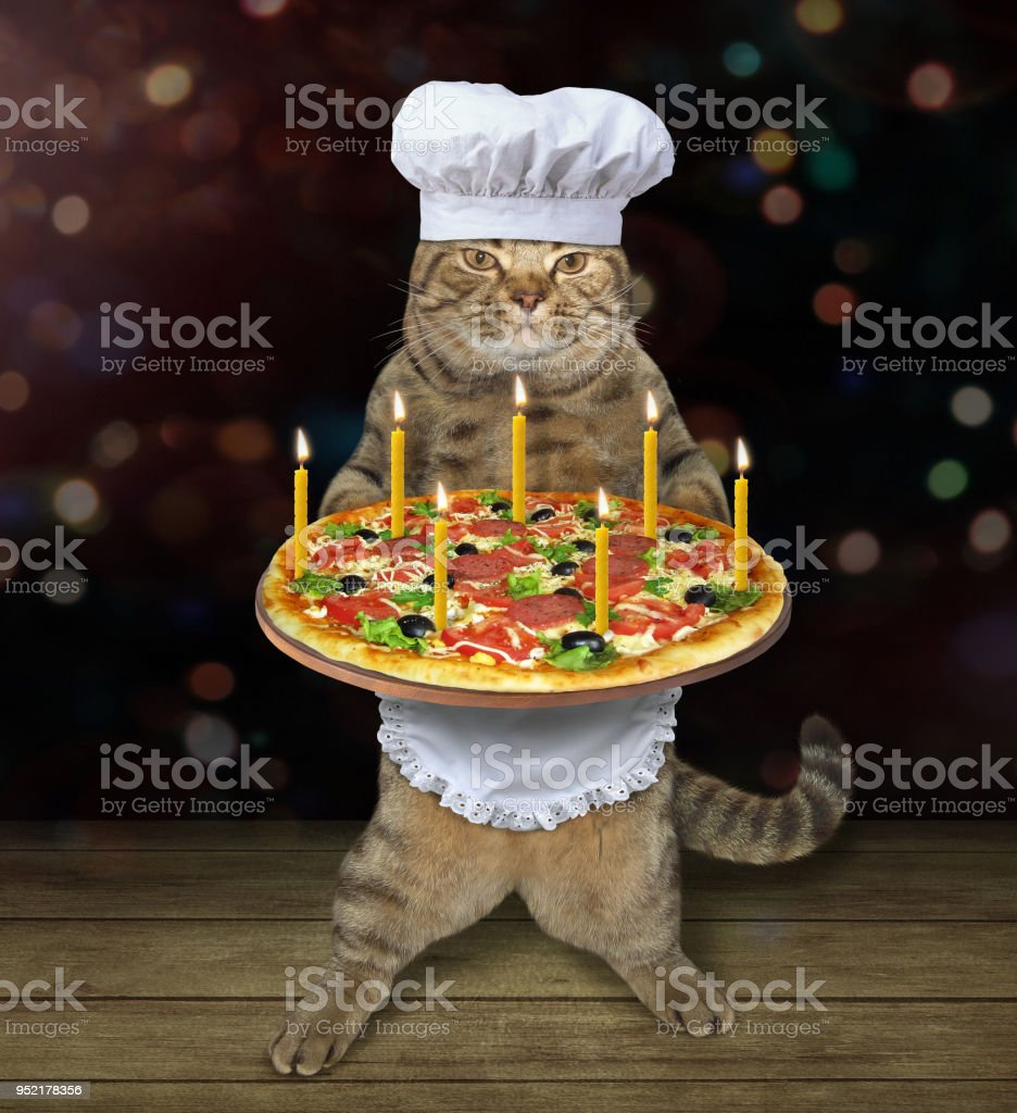 Cat chef with a holiday pizza 2 stock photo