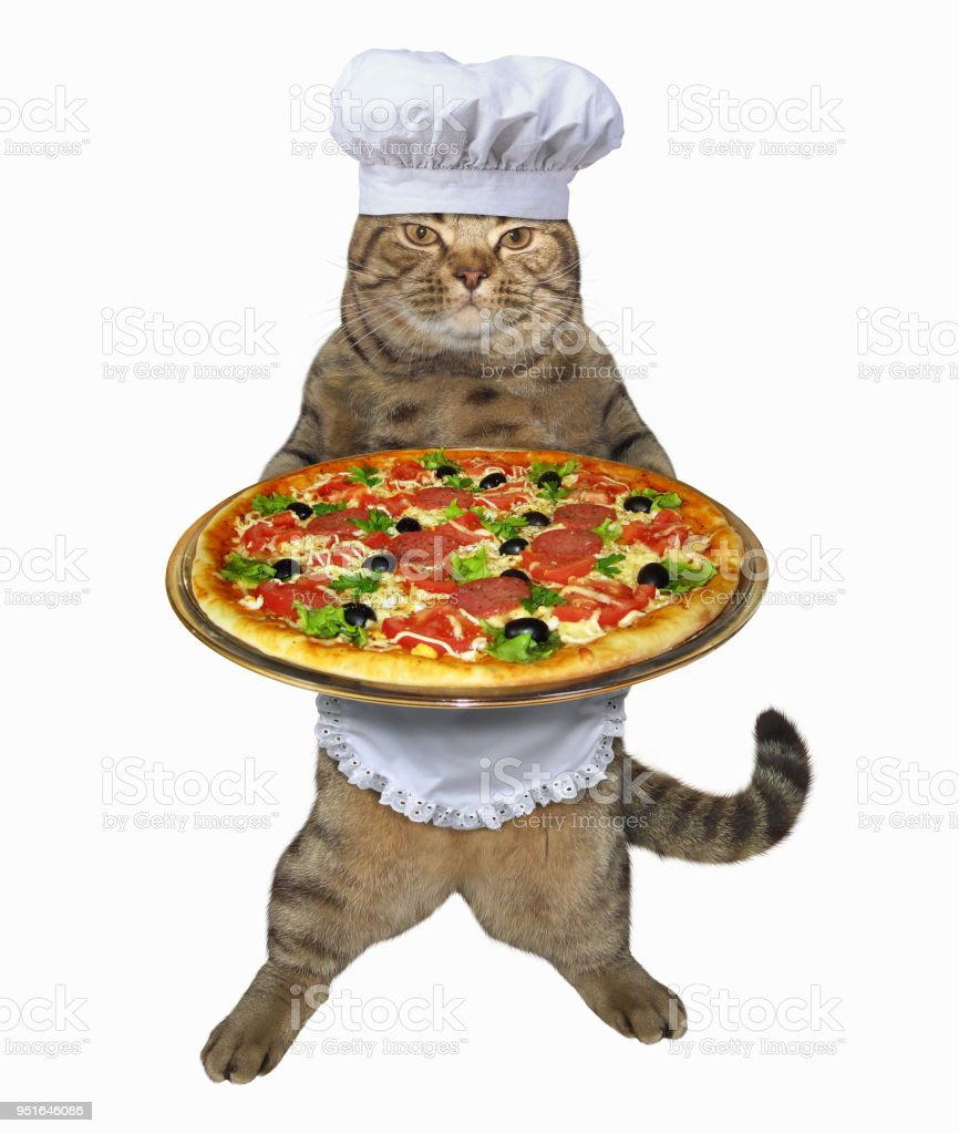 Cat chef with a pizza stock photo