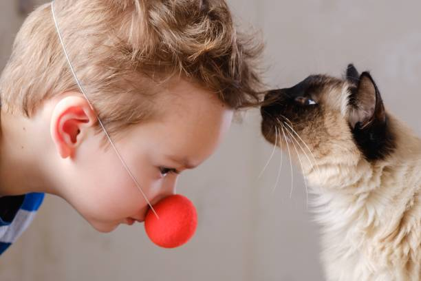 Cat child balinese together play pet picture id1126736875?b=1&k=6&m=1126736875&s=612x612&w=0&h=pc3luc4gipag8djsjvh35m3wyv12i3l5a hrtepznko=