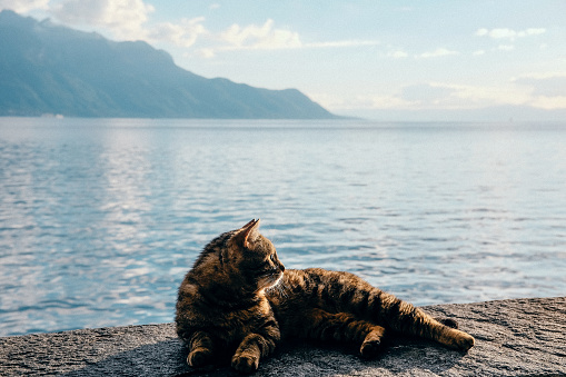 A cat chills on the shore of Lake Geneva