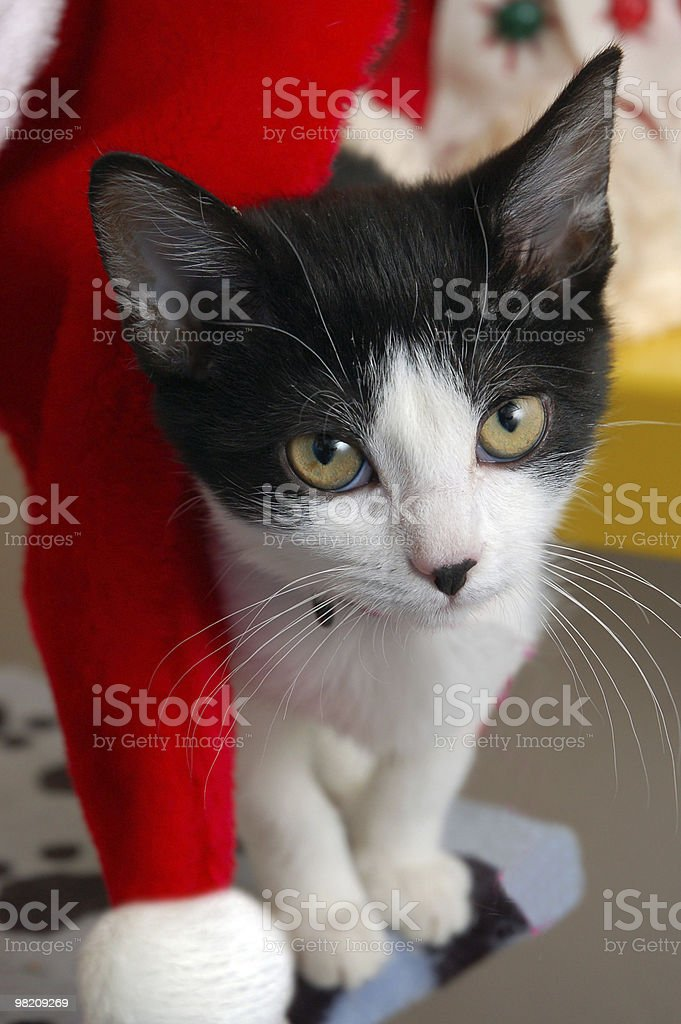 Cat Christmas royalty-free stock photo