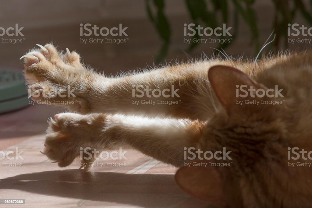 Cat clawed foot stock photo