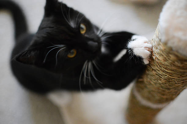 Cat claws in a scratching post stock photo