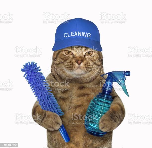 Cat cleaner in a blue cap picture id1154637104?b=1&k=6&m=1154637104&s=612x612&h=o23wbplvhvshaywyownyb6d7  fqjxxpbipwhrwn 8e=