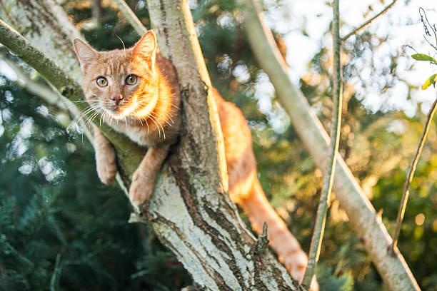 katze klettern einen baum - suche katze stock-fotos und bilder