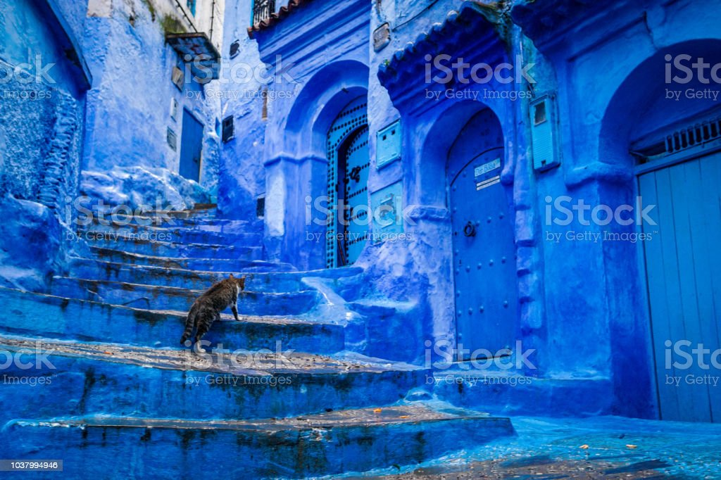 A cat climbs stairs on a blue painted street in the medina of Chefchaouen in Morocco - Стоковые фото UNESCO роялти-фри