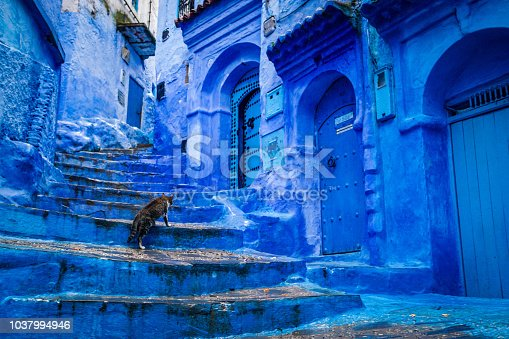 istock A cat climbs stairs on a blue painted street in the medina of Chefchaouen in Morocco 1037994946