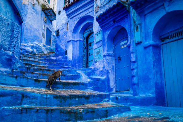 a cat climbs stairs on a blue painted street in the medina of chefchaouen in morocco - котик яркий стоковые фото и изображения