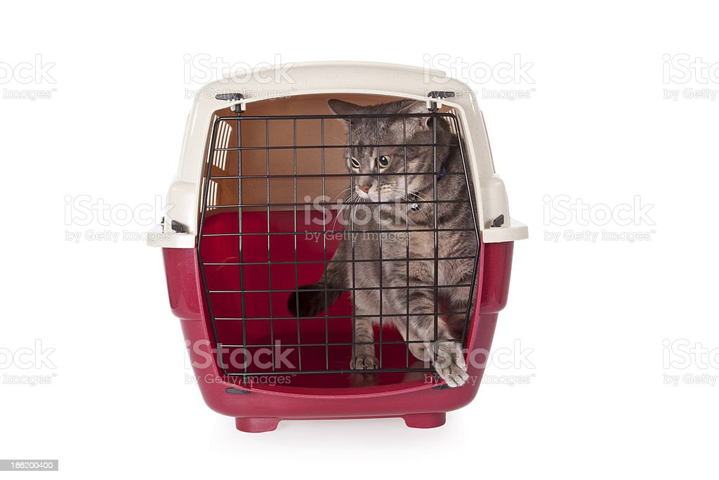 cat closed inside pet carrier isolated on white background royalty-free stock photo