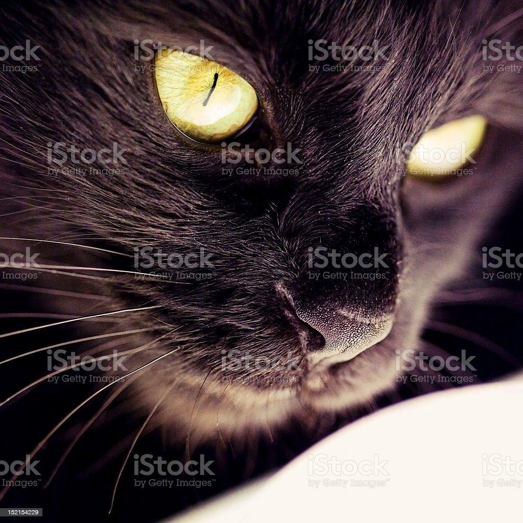 Cat closeup royalty-free stock photo