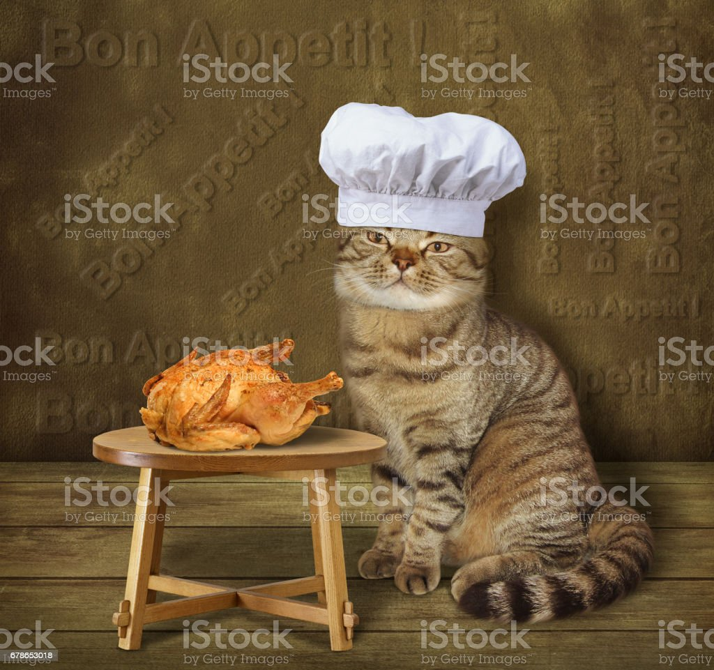 Cat cook made a fried chicken stock photo